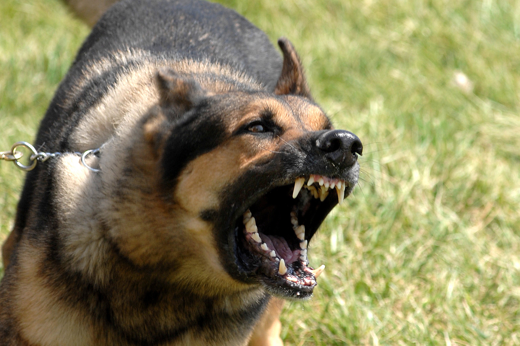 How much will a dog bite cost? About $37,200